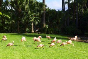 Loro Park, Tenerife