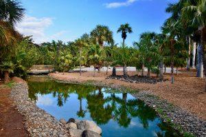 Palmetum, Santa Cruz